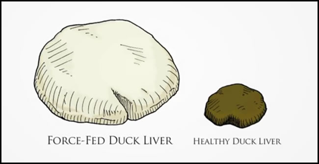 Foie Gras Comparison With Healthy Normal Liver